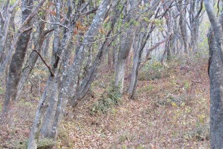 161106黒鼻山~北泉ヶ岳~泉ヶ岳 (16)s