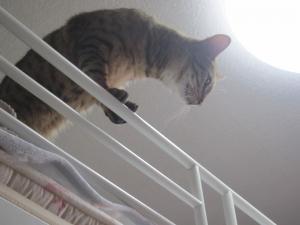 上から覗き見