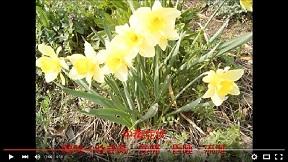 身近な毒草・有毒植物