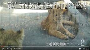 桐生が岡動物園で2匹公開
