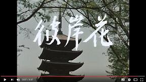 『彼岸花』予告編