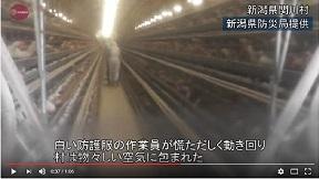 高病原性鳥インフル検出 新潟県関川村の養鶏場
