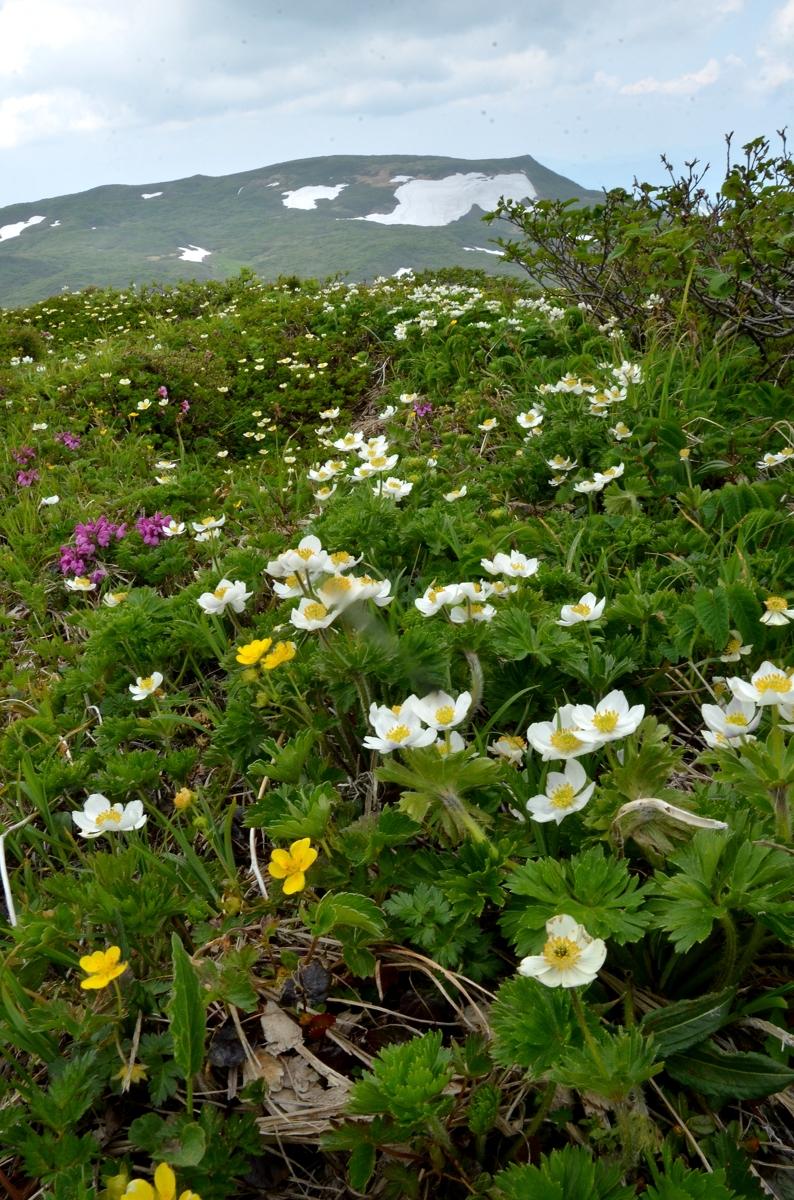 焼石岳2016 485-2s