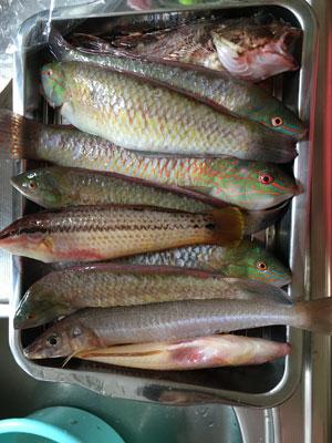 boatfishing1615.jpg