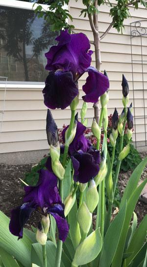 flower05191601.jpg
