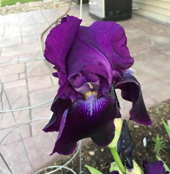 flower05191602.jpg