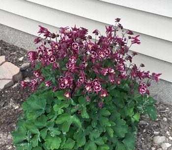 flower05191606.jpg