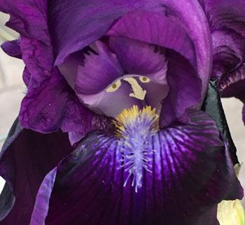 flower05191607.jpg
