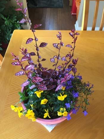 flowers111516.jpg