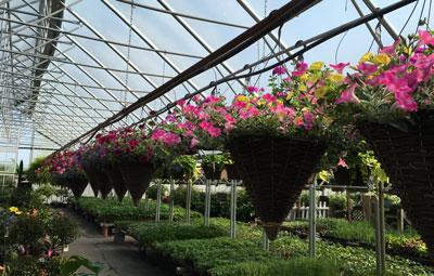 garden05051501.jpg