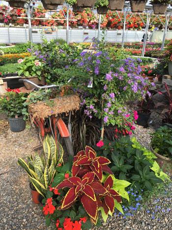 garden05051503.jpg