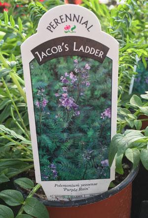 garden05051504.jpg