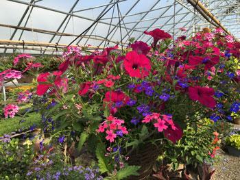 garden05051508.jpg