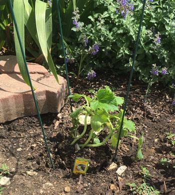 garden07201602.jpg