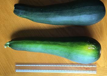 zucchini1601.jpg