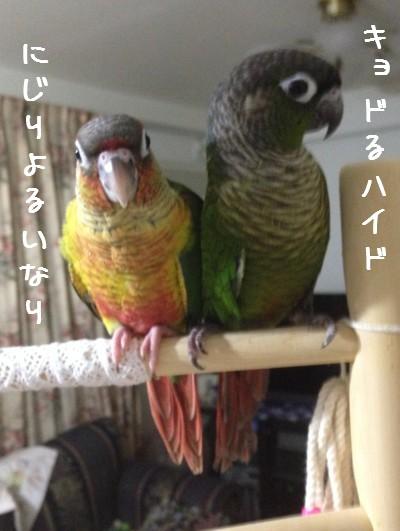 いなりひめ1