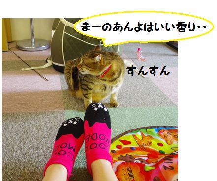 猫靴下①ー