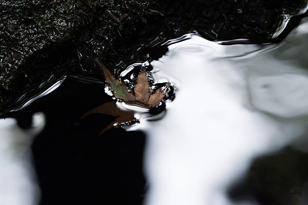水の流れとモミジの落ち葉