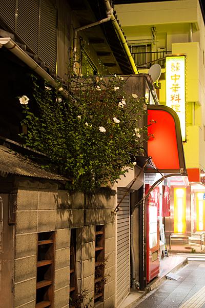夜のムクゲと中華料理屋