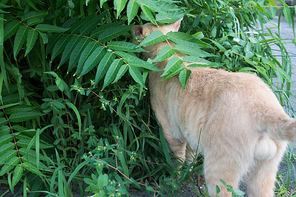 道草を食う猫