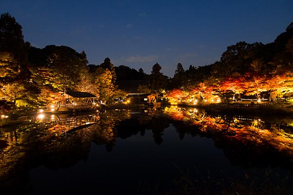 東山植物園奥池ライトアップ