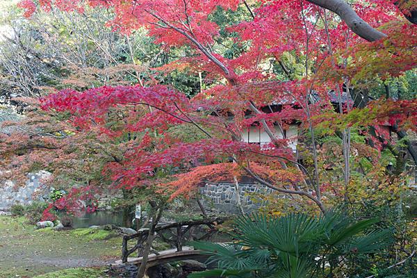 三賞亭と紅葉