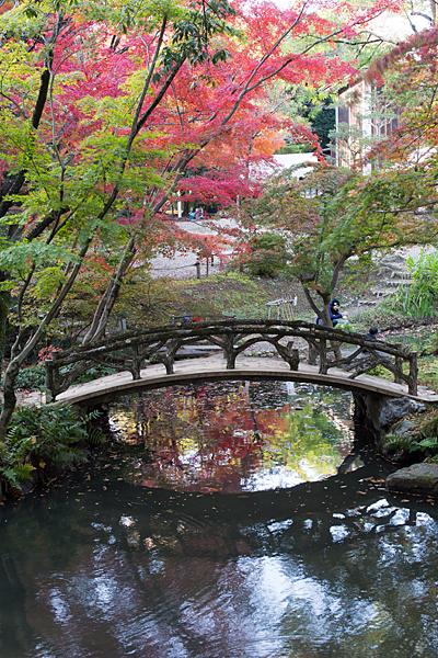 回遊式庭園の池と橋