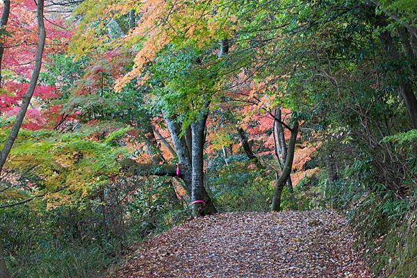 日本庭園裏紅葉の散策路