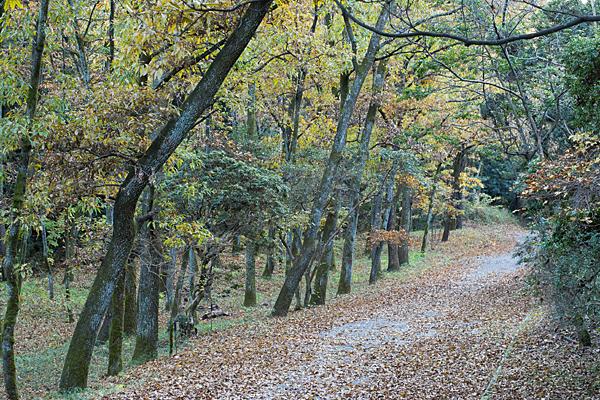 秋枯れの雑木林