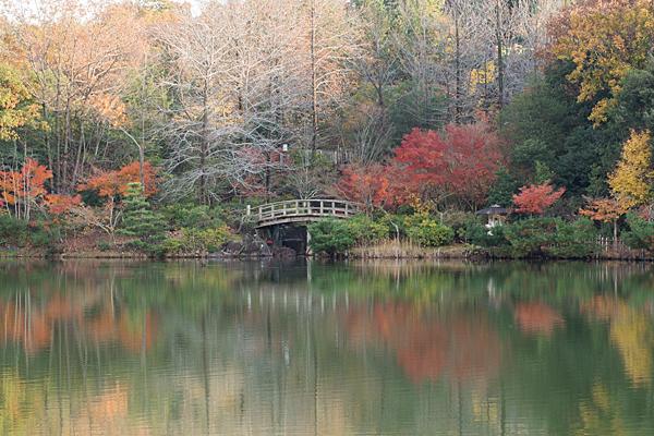 モリコロパーク紅葉風景