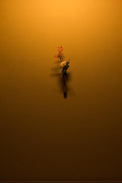 茶室のツバキと灯台躑躅の紅葉