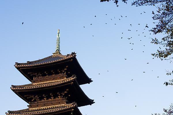 興正寺五重塔と鴉の群れ