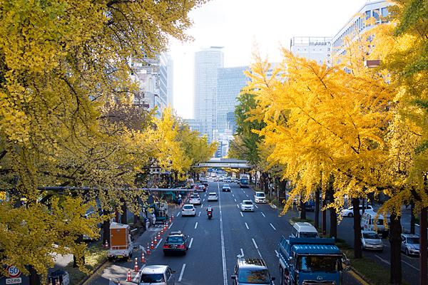 日銀前歩道橋から見るイチョウ並木