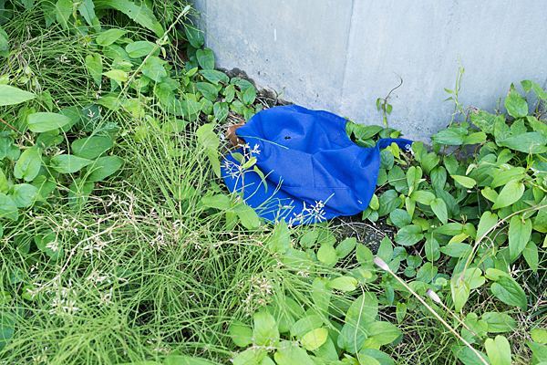 草むらに青いキャップ