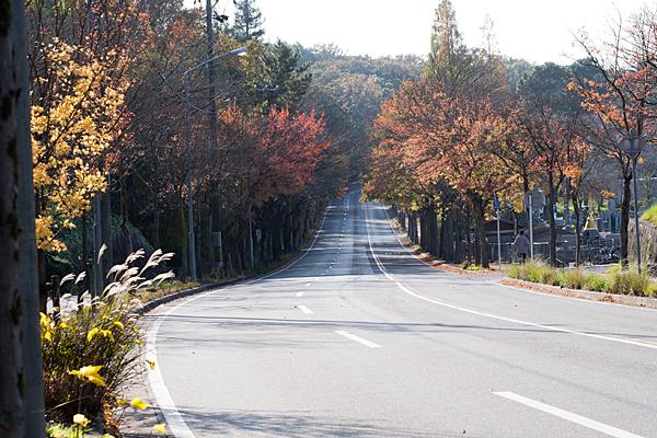 平和公園横道路