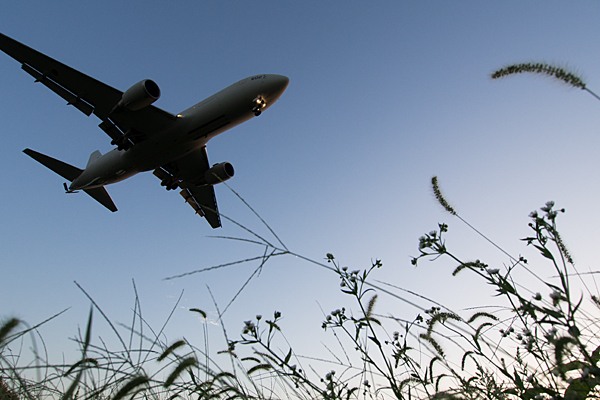 エノコロと飛行機
