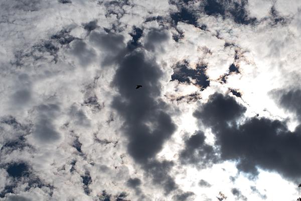 雲とカラス
