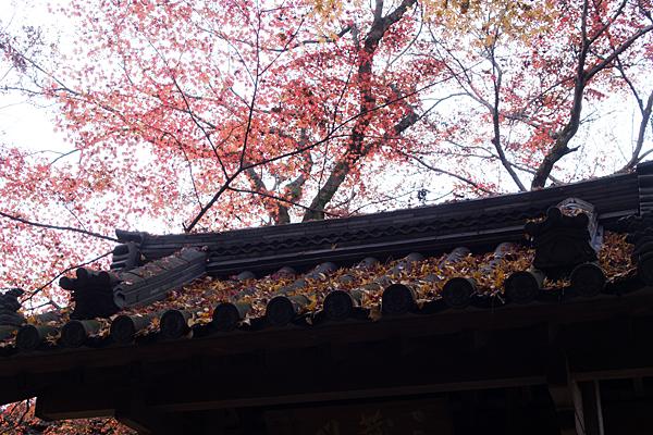 三蔵門に積もった落ち葉