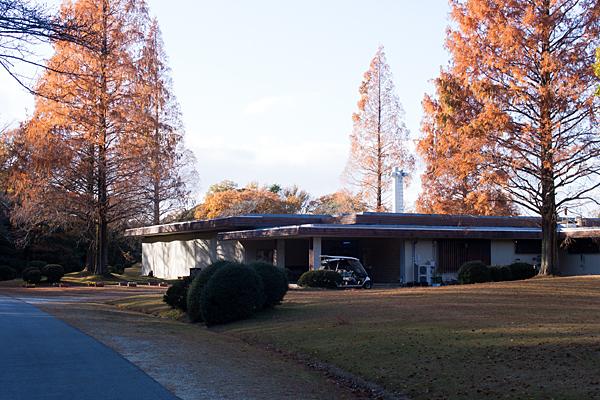 展示館とメタセコイアの紅葉