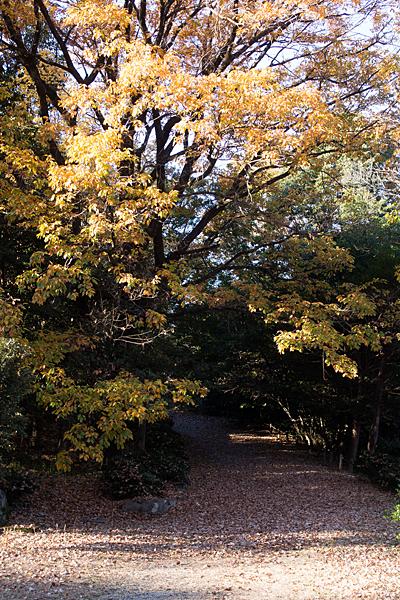 秋枯れの散策路
