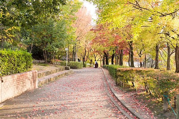 秋色の散策路