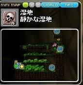 Maple12.jpg