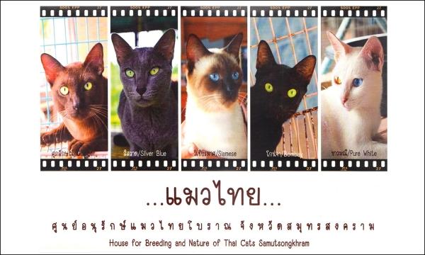 タイ猫交配養育施設 地図 アップデート タイ Thai ไทย map บ้านแมวไทย cats