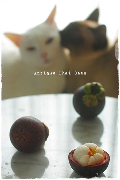 タイの果物 マンゴスチンの季節 フルーツ Fruit ผลไม้ mangosteen มังคุด 猫 カオマニー オッドアイ cat khaomanee oddeyes แมว ไทย ขาวมณี シャム タイ 原種 Siamese Thailand วิเชียรมาศ