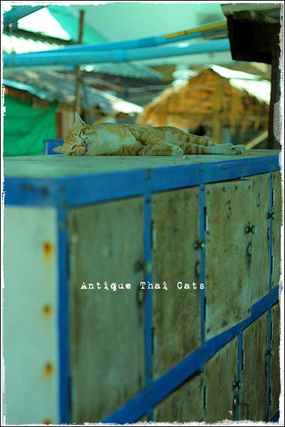 お出かけ ロッカーにゃん子 cats ラーン島 เกาะล้าน Koh laan Island