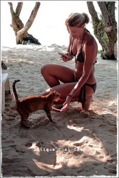 お出かけお手する猫 ラーン島 Koh Larn เกาะล้าน island タイ Thai ไทย パタヤ Pattaya พัทยา 砂浜 beach หาดทราย 海 sea ทะเล
