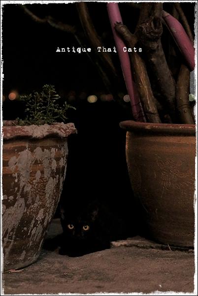 お出かけ 闇夜の黒猫 ラーン島 Koh Larn เกาะล้าน island タイ Thai ไทย パタヤ Pattaya พัทยา 砂浜 beach หาดทราย 海 sea ทะเล