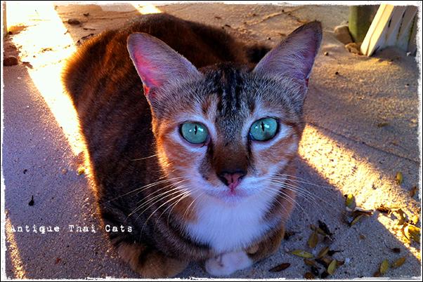 お出かけ グリーン愛キャット ラーン島 Koh Larn เกาะล้าน island タイ Thai ไทย パタヤ Pattaya พัทยา 砂浜 beach หาดทราย 海 sea ทะเล