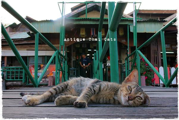 猫とレトロ ティエン船着場 タイ ヲソト 野良猫 地域猫 stray alley cat Thailand แมว ไทย アンティークタイキャット