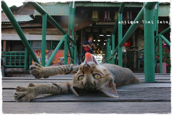 猫と時間軸 ティエン船着場② タイ ヲソト 野良猫 地域猫 stray alley cat Thailand แมว ไทย アンティークタイキャット
